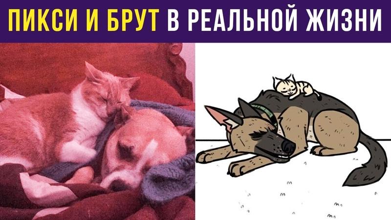 Приколы с собаками. Пикси и Брут В РЕАЛЬНОЙ ЖИЗНИ Мемозг 296