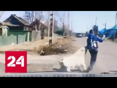 Спасли от зубов гигантского пса нападение агрессивной собаки на школьника попало на видео Росси…