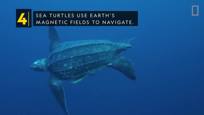 Sea Turtles 101 _ National Geographic