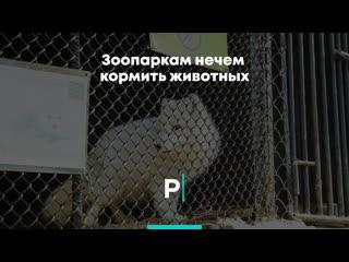 Зоопаркам нечем кормить животных