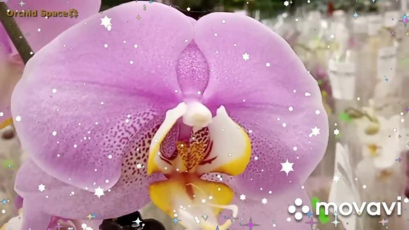 ▶ БОМБЕЗНЫЙ ЗАВОЗ ОРХИДЕЙ Orchid Space🌟