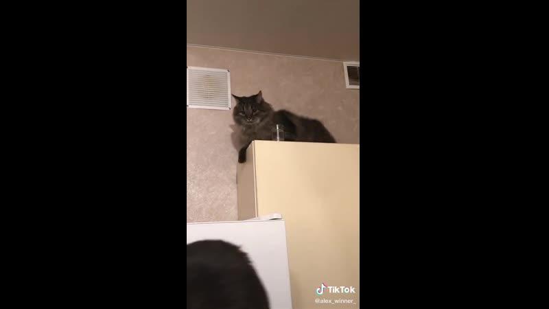 Кот-алкоголик, горе в семье