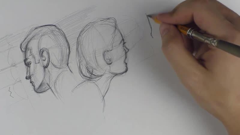 8 Общие построения лица и пропорции №3 Две головы Мужчина и женщина
