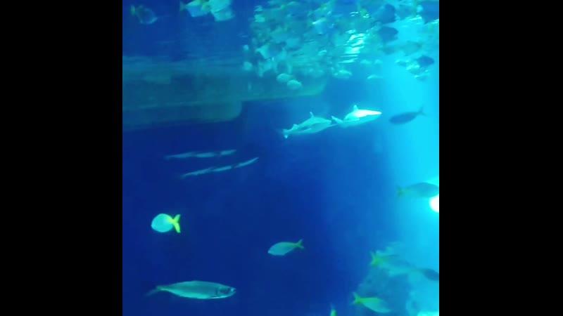 SEA LIFE 🌊🐠🐚OBERHAUSEN DEUTSCHLAND