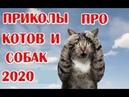 12 минут смеха до слёз СМЕШНЫЕ ПРИКОЛЫ c котами и собаками подборка приколов 2020 с животными