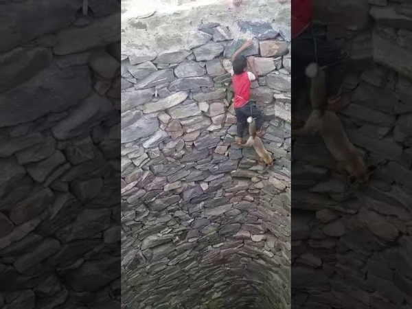 In Yemen is young A child rescues a fox from a well of 15 meters