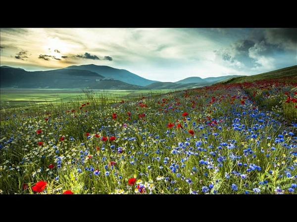 И цветы и шмели и трава Иван Бунин