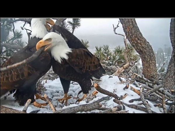 Big Bear Eagles ~ Shadow Jackie STICK DANCING In The Snow ❄️❄️ Rock On 3 19 20