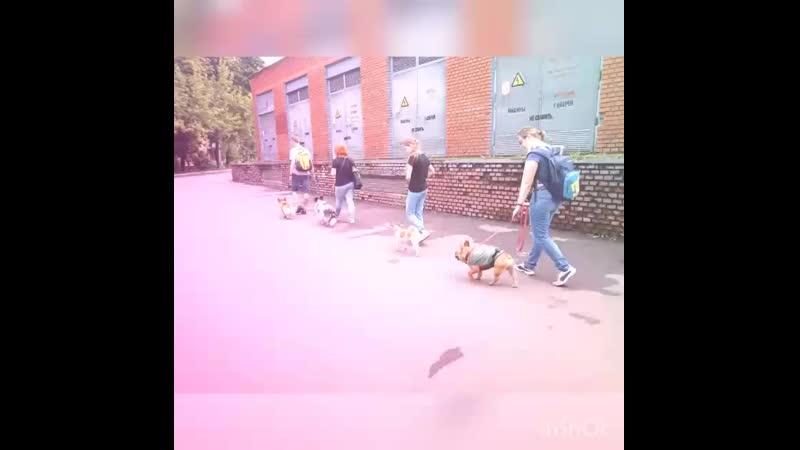 Выход в город с послушной собакой