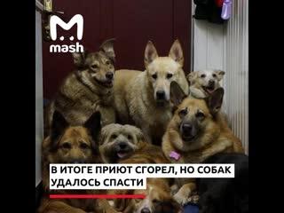 "26 собак ""бастуют"" на Арбате, требуя восстановить справедливость"