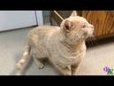 Кот со стрелой в голове просил о помощи у людей - увиденное повергло их в шок