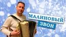 Паша гармонист - Малиновый звон. ПОЮ С ДУШОЙ.