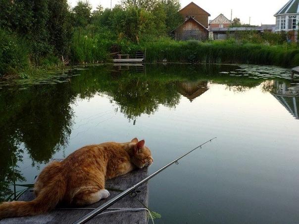 Ловись рыбка большая и маленькая картинки прикольные, картинки смешные