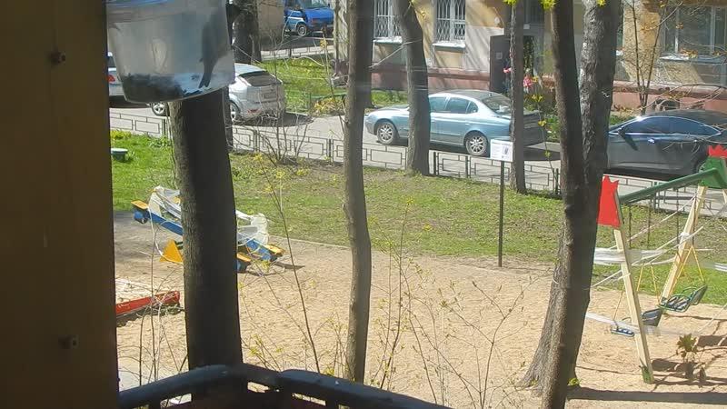 Птица зеленушка Облюбовала кормушку на балконе