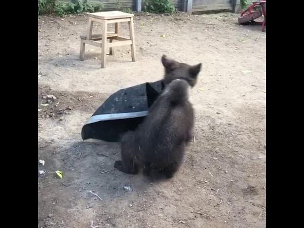 1 класс медвежонка