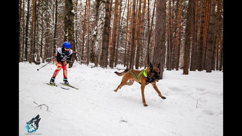 2020 скиджоринг с малинуа Мали Флайт Штит skijoring Ice Race 2020