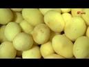 Картофелечистка K-200