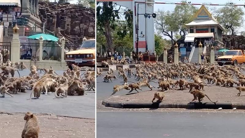 Дикие животные приходят в города Природа отдыхает от деятельности человека
