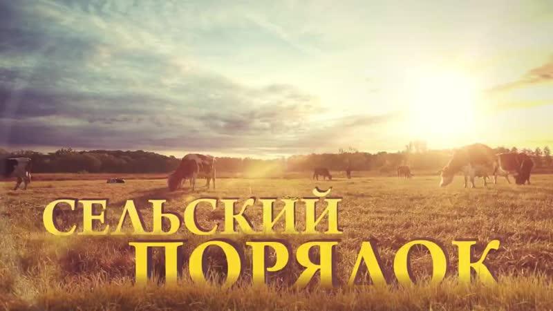 «Сельский порядок». Грайворонское Косилово.mp4