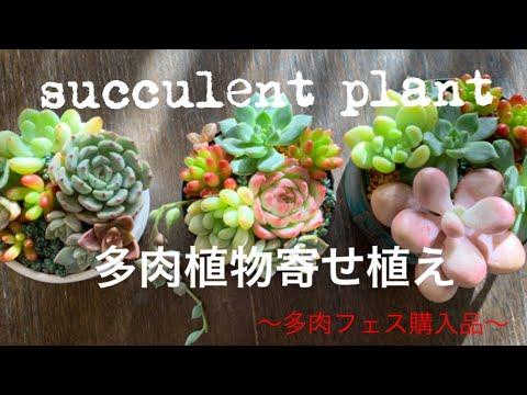 多肉植物11 寄せ植え作り リメイク缶 ペイント鉢