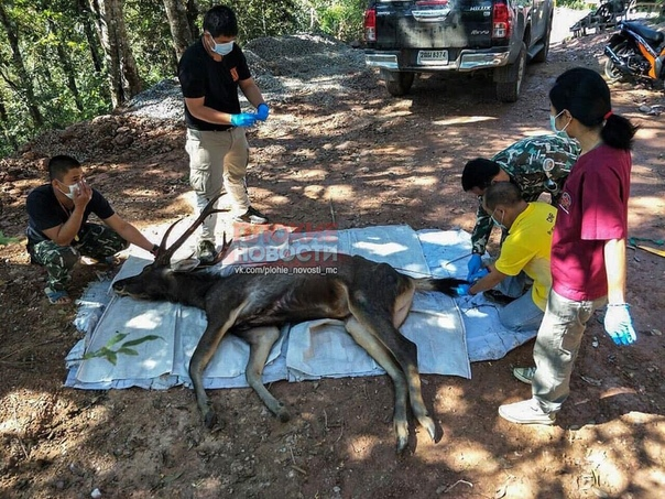 В Таиланде посетителей национальных парков обяжут уносить мусор с собой Соответствующие правила будут введены с 1 января 2020 года. Причина тому смерть дикого оленя в национальном парке «Кун