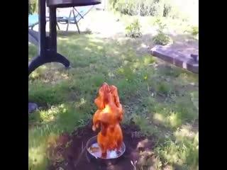 Как готовить курицу