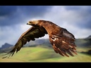 Сила хищных птиц (Документальные фильмы, передачи HD)