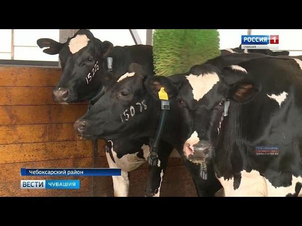 В Чебоксарском районе начал работу эмбриональный центр крупного рогатого скота