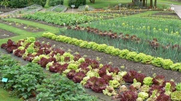 Хитрые советы садоводам и огородникам.