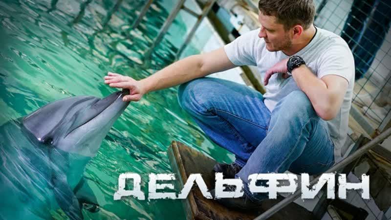 Delfin 2020 1 4 серия