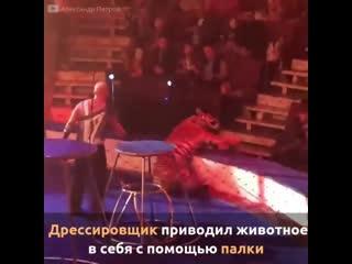 Цирк - мучения для животных