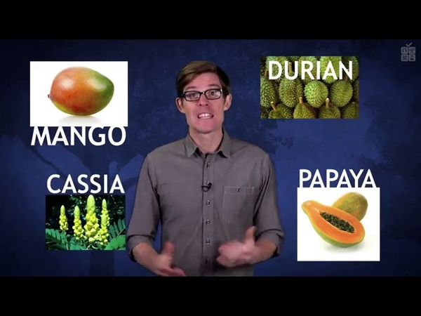 Призраки эволюции почему у авокадо большая косточка