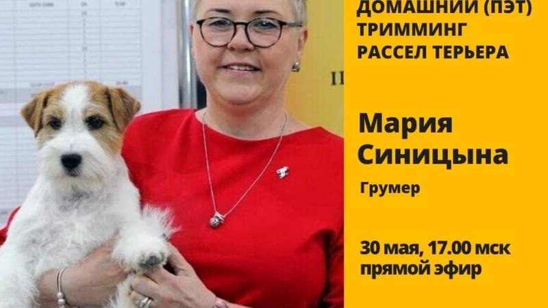 Домашний пэт тримминг рассел терьера с Марией Синицыной