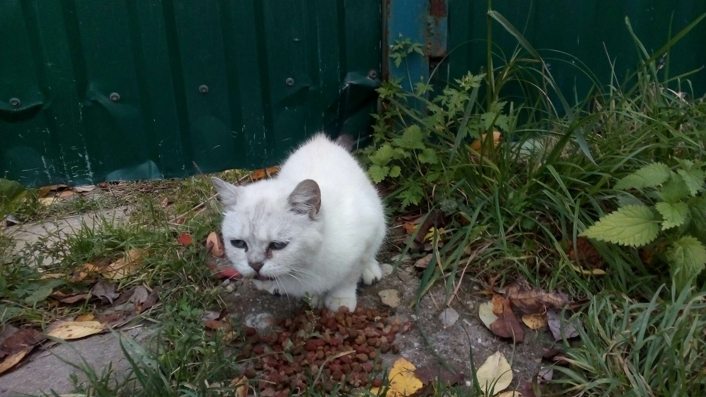 Может кому нибудь приглянеться милая кошка оставили