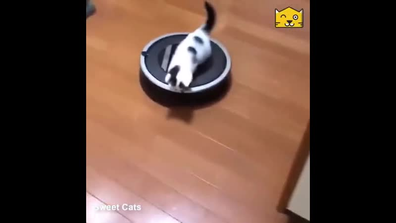 Cutе kitty finds a nеw distraсtiоn