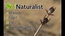 INaturalist - легкий старт для начинающих