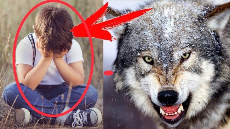 Мальчик спас волчонка спустя несколько лет повзрослевший волк отплатил