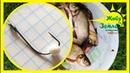 Рыба ловится на пенопласт! Рыбалка на донки Крокодил.