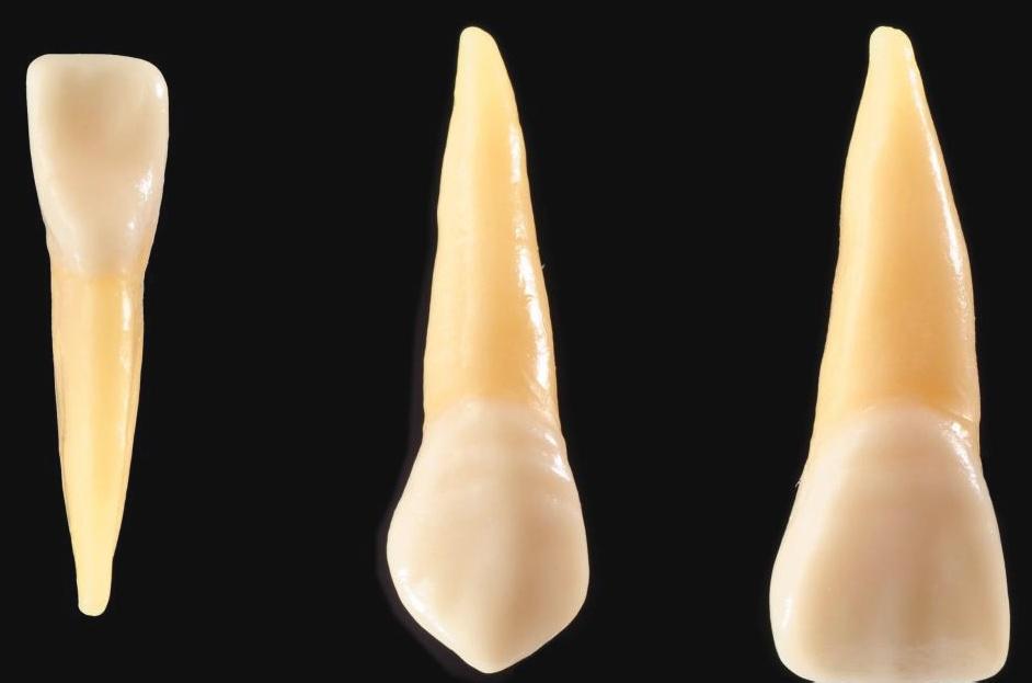 Самая трудная часть человеческого тела, эмаль - это защитный наружный слой зубов.
