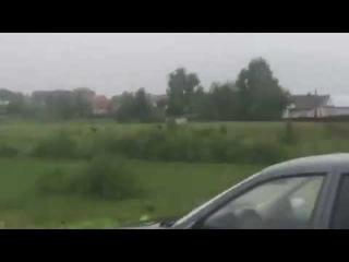 На окраине Йошкар-Олы бегают лоси