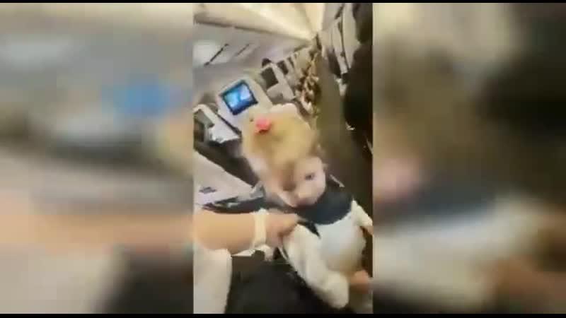 Двух летний ребенок отказался одеть маску в самолёте.