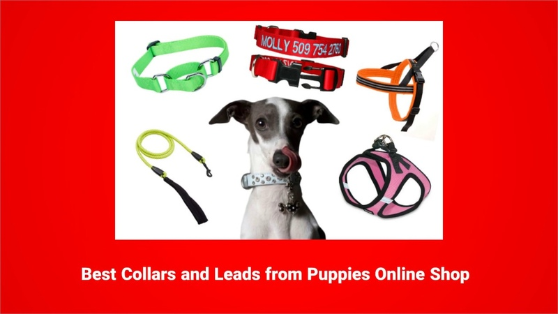 Dog Leads, Leashes Harnesses, Collars, Anti bark collars and Handheld training devices