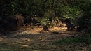 «Мифы Амазонки 1. Зелёный ад или рай» Документальный, природа, животные, 2011