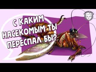 С каким насекомым ты переспал бы
