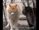 Веселые картинки. Смешные приколы про котов.