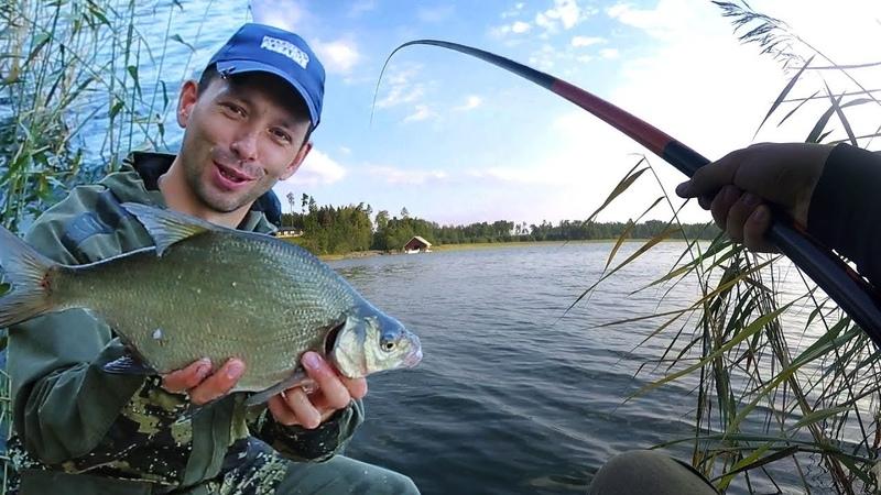 Что будет если кормить ЛЕЩА с вечера Проверяем теорию про уловистость привады Рыбалка на поплавок