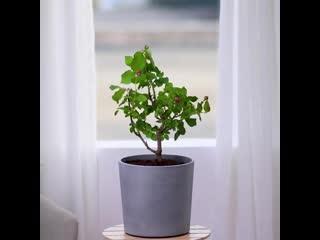 Уход за растениями. Смотри, какой дизайн