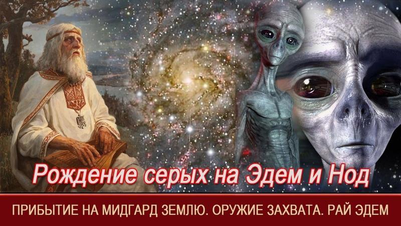Рождение серых на Эдем и Нод | Прибытие на Мидгард Землю | Оружие захвата | Рай | Эдем | Уроки Асгарда