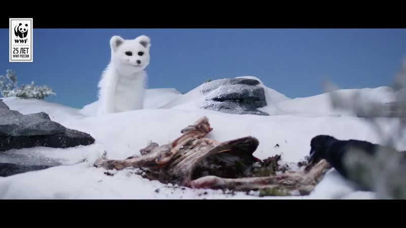 Озвучание проектов Для Всемирного фонда WWF Шторм и Тинде Борьба за выживание